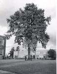 Men at Tree in Front of Centennial Hall by Concordia University - Portland
